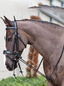 Training-Tool Equestrian-Supplies Racing-Equipment Bridle Horse-Rein HALTERS 3M Stretcher
