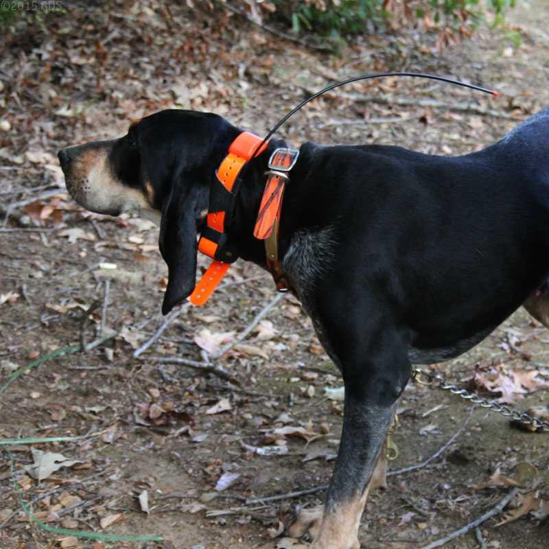 Garmin Dc 40 Perros Seguimiento Collar para Astro 220 Or 320