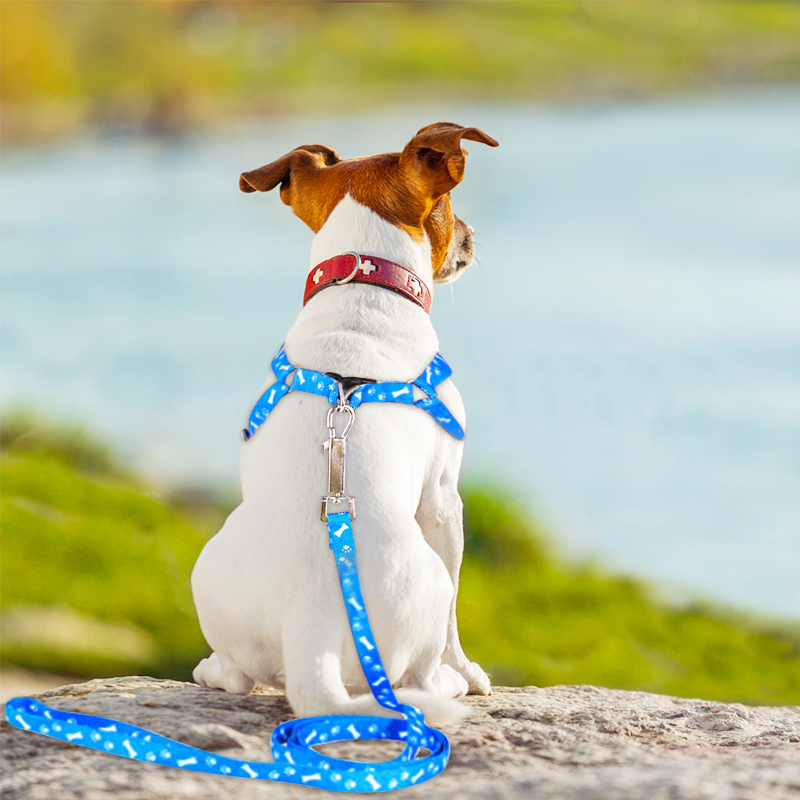 Pet Dog Harness Adjustable Pet Leashes Puppy Collar for Small Dogs Cat  Harness Medium Dog Accessories Outdoor Walk Arnes Perro Harnesses  -  AliExpress