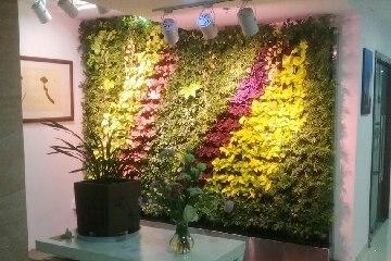 赣州植物墙【华星世纪大楼】异形绿植墙