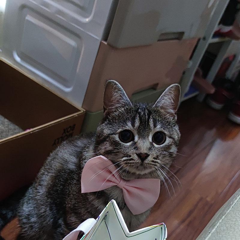noeud papillon pour chat rose