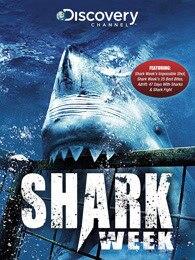 鯊魚周2014