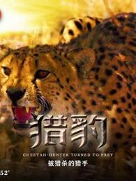 獵豹:被獵殺的獵手