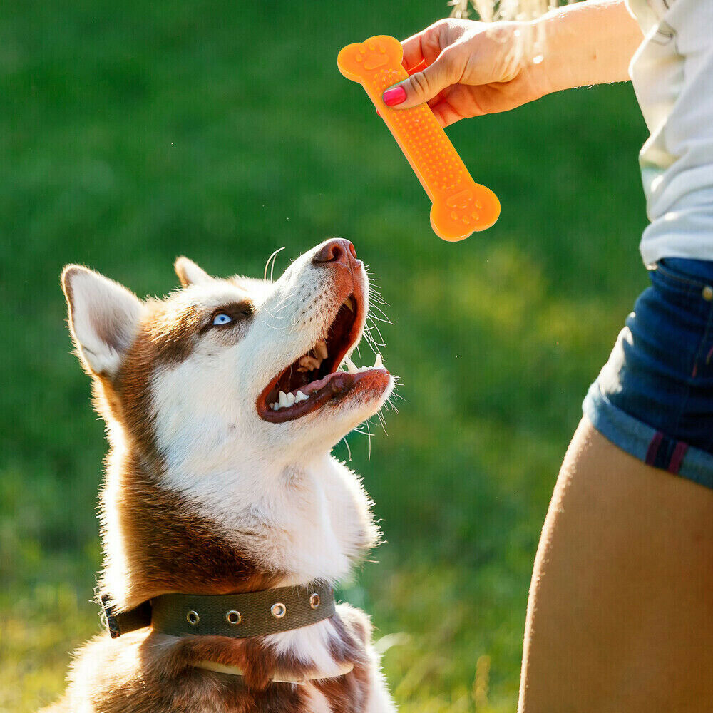 Hot Sale Pet Dog Chew Toys Rubber Bone Toy Aggressive Chewers Dog Toothbrush Doggy Puppy Dental Care For Dog Pet Accessories