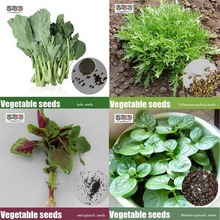 Promotions Chinese vegetables Malabar spinach seeds / kale seeds /  red spinach seeds /  Cichorium endivia seeds DIY Home Garden