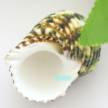 020817  Replace the shell shell conch hermit crab roll shell fish 5-6 cm light green Rong screw fish tank aquarium decorations