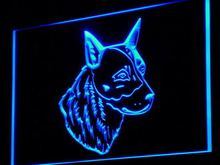 j255 Australian Cattle Dog Shop LED Neon Light Sign Wholesale Dropshipping On/ Off Switch 7 colors DHL