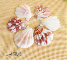 020822  12pcs\lot  Conch shells on the wall platform wedding decoration aquarium landscape home furnishing articles fan shell
