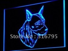 j255 Australian Cattle Dog Shop LED Neon Light Sign Wholeselling Dropshipper On/ Off Switch 7 colors DHL