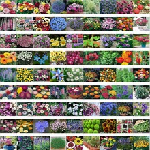 mixed 200 seeds/pack Spring and autumn of the four seasons flower seeds the letoff bundle bag flower seeds