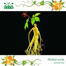 Free shipping 10pcs panax ginseng seeds, medicinal herb seeds, seed vegetables plants(China)
