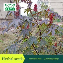 Medicinal Uses Ricinus Communis Herbal Seeds Red Castor Bean, Ornamental Plant seeds 15 particles / bag(China)