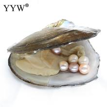 YYW DIY 2pcs 8-9mm Loose Pearl Earring Beads inside Vacuum packed Mussel Shell Oyster Freshwater Cultured Love Wish Pearl Oyster(China)