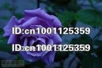 бесплатная доставка 300 шт./лот розы радуга розы цветок садовые растения