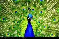 оптовая продажа 50 шт./лот длина 25-30 см, ширина 3.5 см натуральный цвет глаз Полина хвост