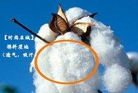 новый горячая распродажа, уникальный мода летучая мышь с коротким рукавом свежий цвет дамы майка