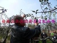 кол во продаж электрических персиковое дерево ножницы бесплатная доставка
