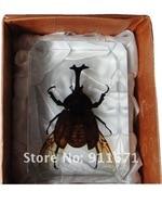 бесплатная доставка искусственный янтарь, насекомых код / завернутый в бесцветной прозрачной янтарь, маленькая черепаха, бесплатная доставка ремесло сувенир