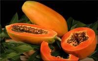 бесплатная доставка желтый большой 156 томата-фрукты семена, новые свежие семена sd0499-0137