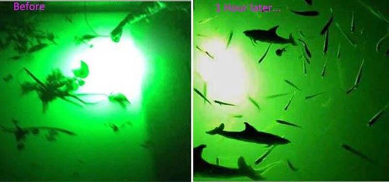 pesca subaquática, para lula, led