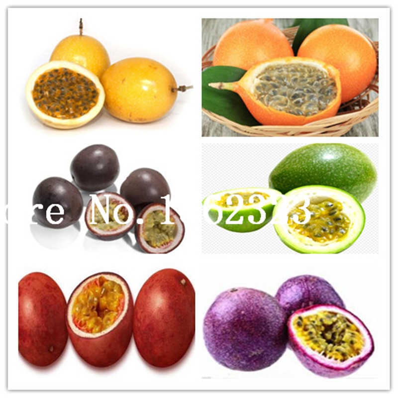 50 Pcs/bag Passion Fruit(Passiflora Edulis)Plants,Rare Tropical And Subtropical Fruit Organic Fruit Tree Bonsai For Home Plant