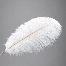 [US Warehouse] 10 pcs Ostrich Feather White warehouse