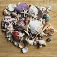 100PCS Mixed Ocean Sea shells Wedding Decor Beach Theme Party, Seashells Home Decorations, Fish Tank, sea star 1