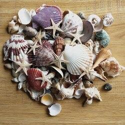 100 шт смешанные морские раковины Свадебные украшения пляж тема вечерние, морские украшения дома, аквариум, морская звезда
