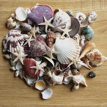 Conchas marinas mezcladas, decoración de boda, Fiesta Temática de playa, decoraciones para el hogar, pecera, Estrella del Mar, 100 Uds.