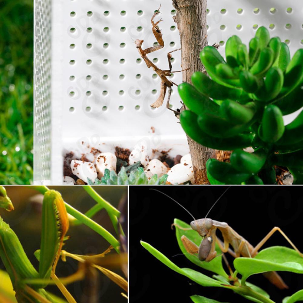 Schildeng Mantis Acrylic Feeding Box Mantis Breeding Box Insect Transparent Reptile Terrarium