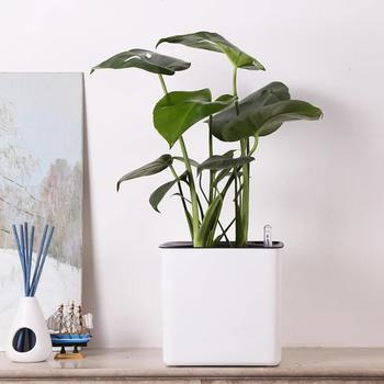 Kwadratowy leniwy doniczka samoprzylepna plastikowa doniczka Office Home Garden pulpit doniczka z wskaźnik poziomu wody S M L tanie i dobre opinie CN (pochodzenie) Nowoczesne Flower Pots Kwiat zielonych roślin Pot brodziki Z tworzywa sztucznego Dark Gray White