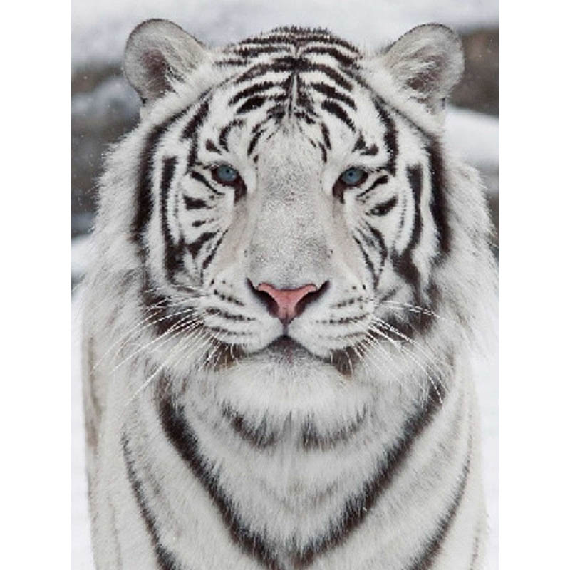 Cat and Tiger Crystal Rhinestone Pictures Arts for Home DIY 5D Diamond Painting Kit