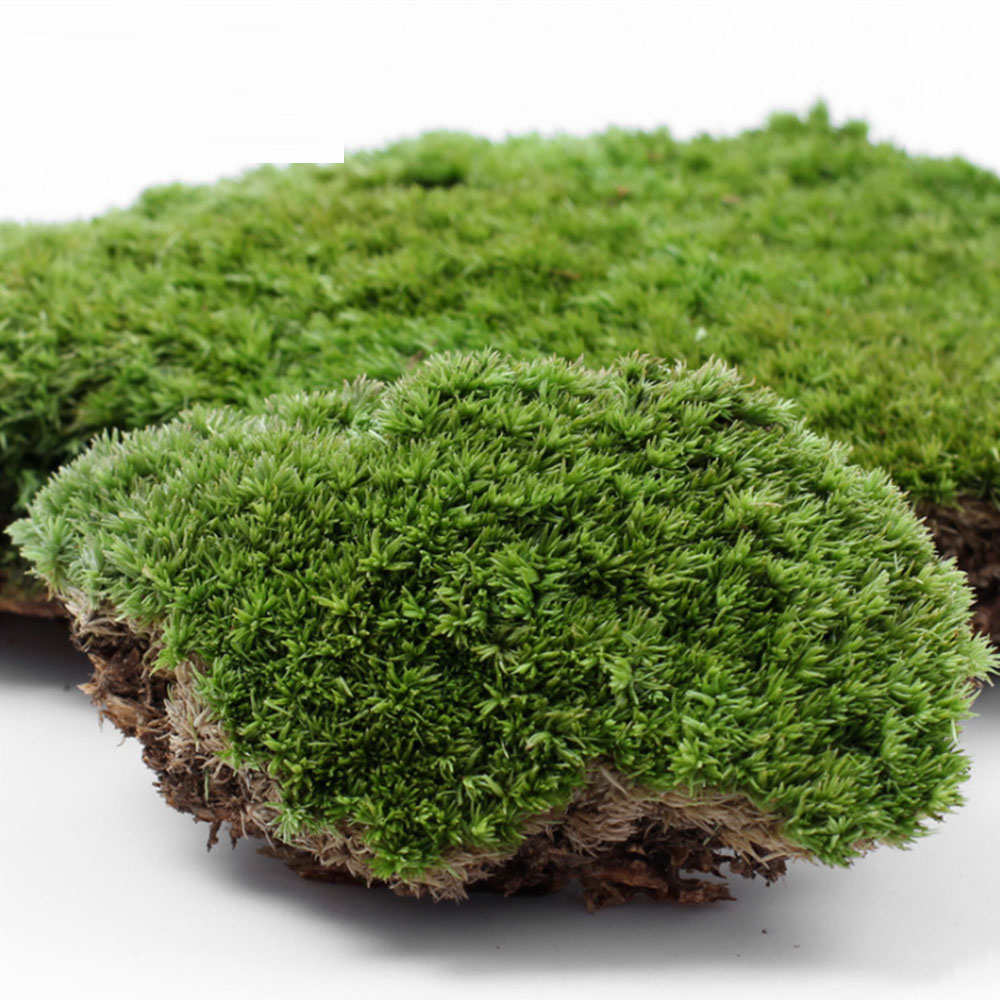 Moss Micro Landscape Ecological Bottle Fresh White Hair Moss Small White Hair Micro Landscape Accessories Material