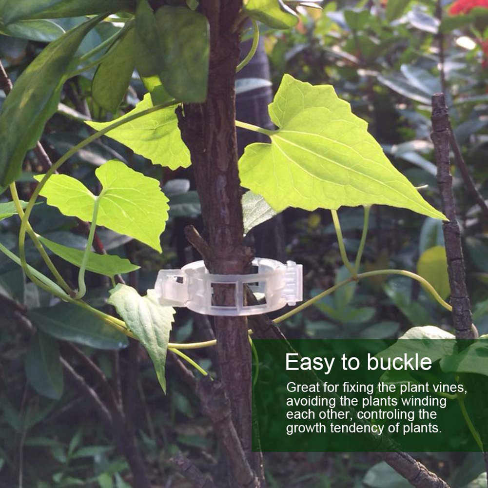 50pcs réutilisable 2.5cm en plastique plante Support Clips pinces pour plantes suspendus vigne jardin serre légumes tomates Clips