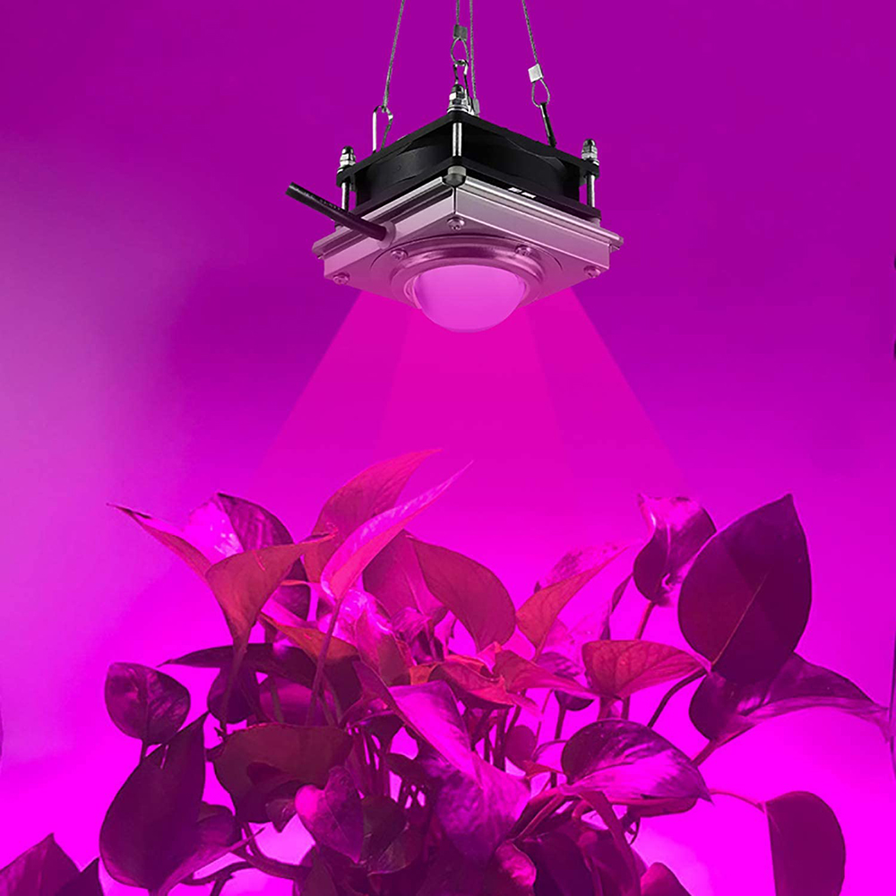 New 3000W COB Full Spectrum 4000K For Indoor Outdoor Hydroponic Greenhouse Plant Flowers LED Growth Lighting Lamp Waterproof
