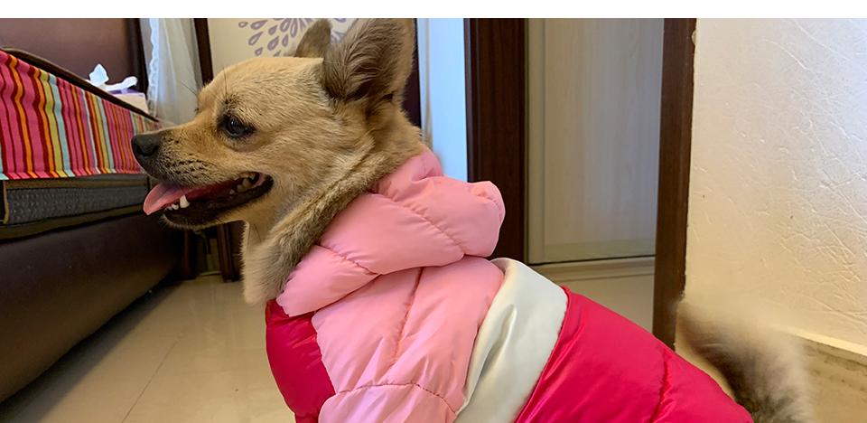 Nueva ropa de invierno para perros, abrigo impermeable con capucha 24