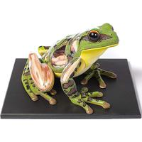 4D Vision Frog Anatomy Model Kit Educational Teaching Animal Model Supplies Montessori Toys For Children
