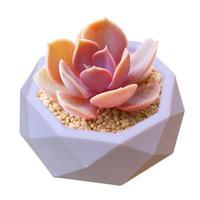 클레이 시멘트 실리콘 몰드 콘크리트 꽃 냄비 장식 기하학 다각형 즙이 많은 식물 꽃병 금형 사무실 홈 인테리어