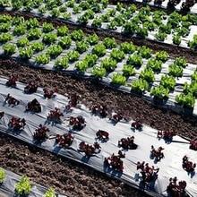 Mulch-Film Greenhouse Plastic Black Vegetable-Plants Agriculture Anti-Gr Keep-Warm