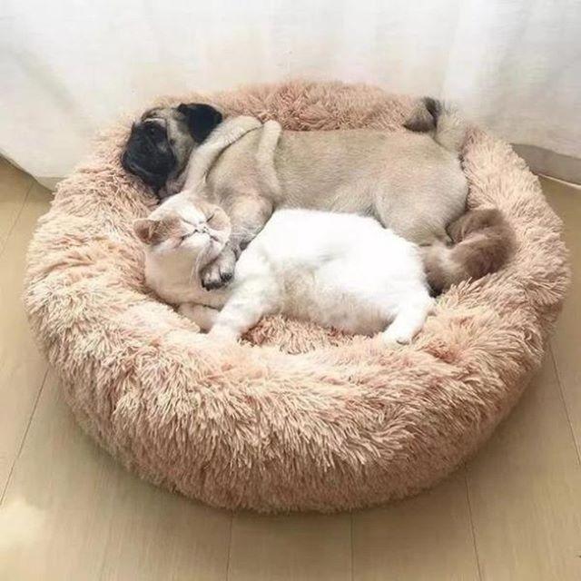 Флисовый теплый домик кровать для домашних собак, щенков и кошек, плюшевый уютный коврик гнездо, домашний диван кровать, спальный мешок, будка для собак, коврик Дома, конуры и манежи      АлиЭкспресс