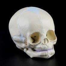 1: 1 มนุษย์ทารกในครรภ์ทารกทารกทางการแพทย์ Skull Anatomical โครงกระดูกอุปกรณ์การสอนสำหรับวิทยาศาสตร์การแพทย์