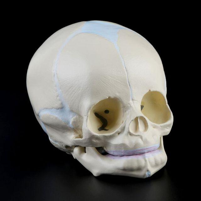1: 1 İnsan Fetal bebek bebek tıbbi kafatası anatomik İskelet modeli öğretim malzemeleri tıp bilimi için