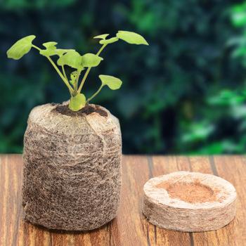 Nowo 100 szt Korki rozruchowe sadzonki gleby blok nasion gleby korki rozruszniki tanie i dobre opinie Plant Food Bryłek Seed 191251