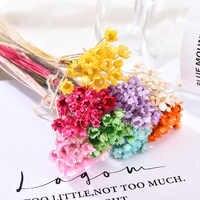 Flores secas de cola de conejo Natural para decoración de flores, para fiesta de boda, álbum de recortes de manualidades