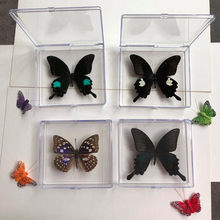 1PCS Natural Real Butterfly Specimen box Colorful Mixed Pretty Butterfly Education Teaching Home Decor Artwork Material gift DIY