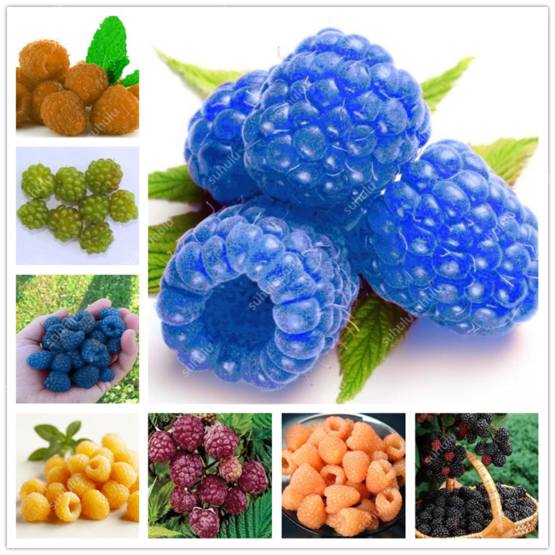 300pcs Raspberry Plants Mixed Colors Super Big Raspberry Fruit Plants Rare Wild Strawberry Tree Plants Flowers Bonsai For Garden