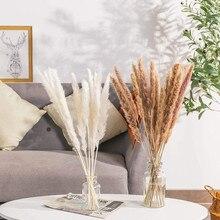 Dekoration Natürliche Reed Getrocknete Blumen Pampas Gras Blume Wohnkultur Hochzeit Dekoration Künstliche Pflanzen Zubehör Boho Teil