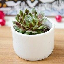 1 Pcs Plastic 5.8x4cm Round Plant Pot Meat Flower Garden Home Office Decor Micro Landscape Planter