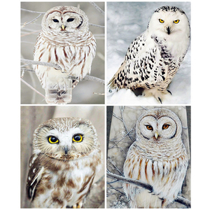 Evershine 5D DIY Diamond Painting Owl Full Square Round Diamond Embroidery Animal Mosaic Rhinestones Pictures Home Decor