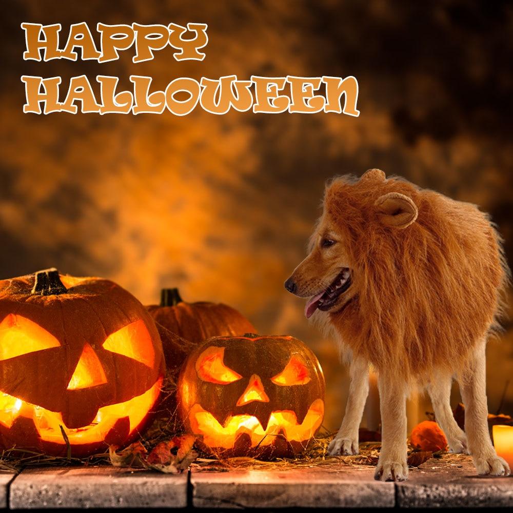 golden retriever lion costume